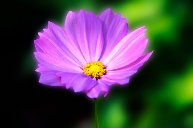 The Power Of A Purple Flower