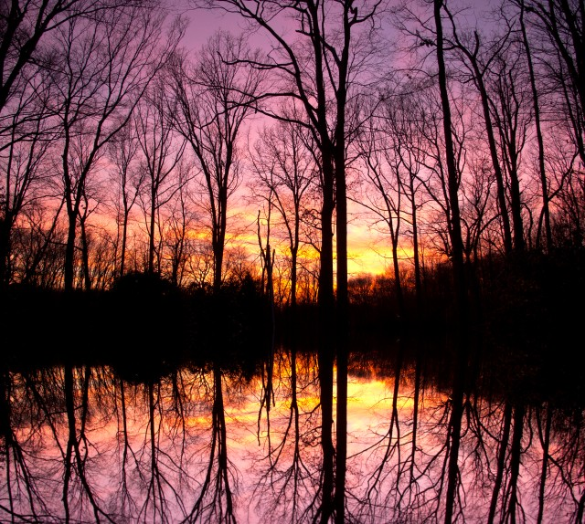 This was taken the night of the tragedy of Newton Shooting in Newton, CT. I will never forget standing in my driveway and marveling at the beautiful sky. Wondering how can a day finish with so much beauty, but have had a horrible tragedy unfold that day. When I went to editing the photo, my feelings where to add a reflection of the trees and the sky. We have to reflect and think about how lines have blurred in our world. The stark reality of our world is with lightness, there is darkness around. With beauty there is a darker side to our world.