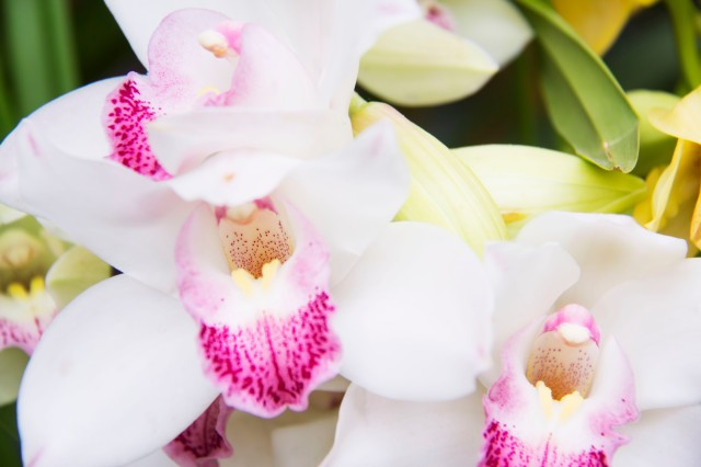 A Symphony of White Orchids.