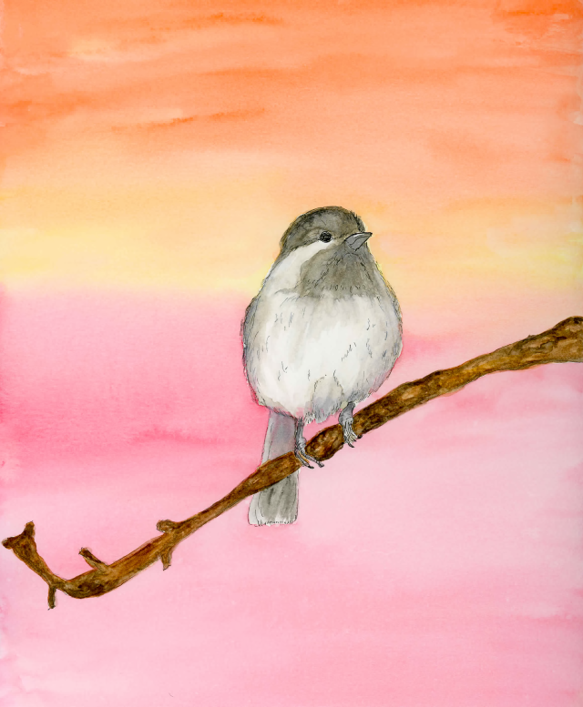 Black Cap Chickadee Watercolor