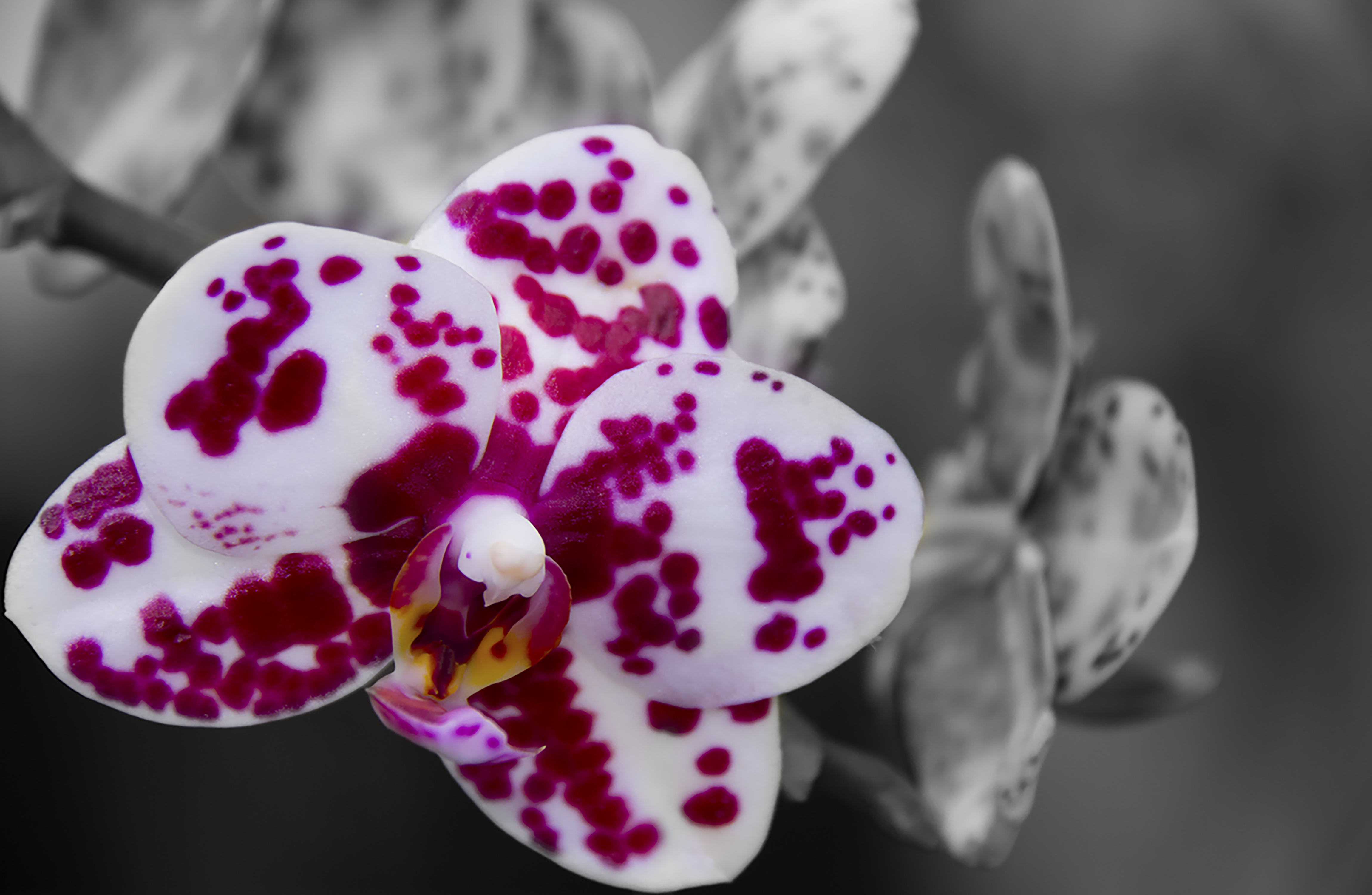 laptoo stickerOrchid Stand Out