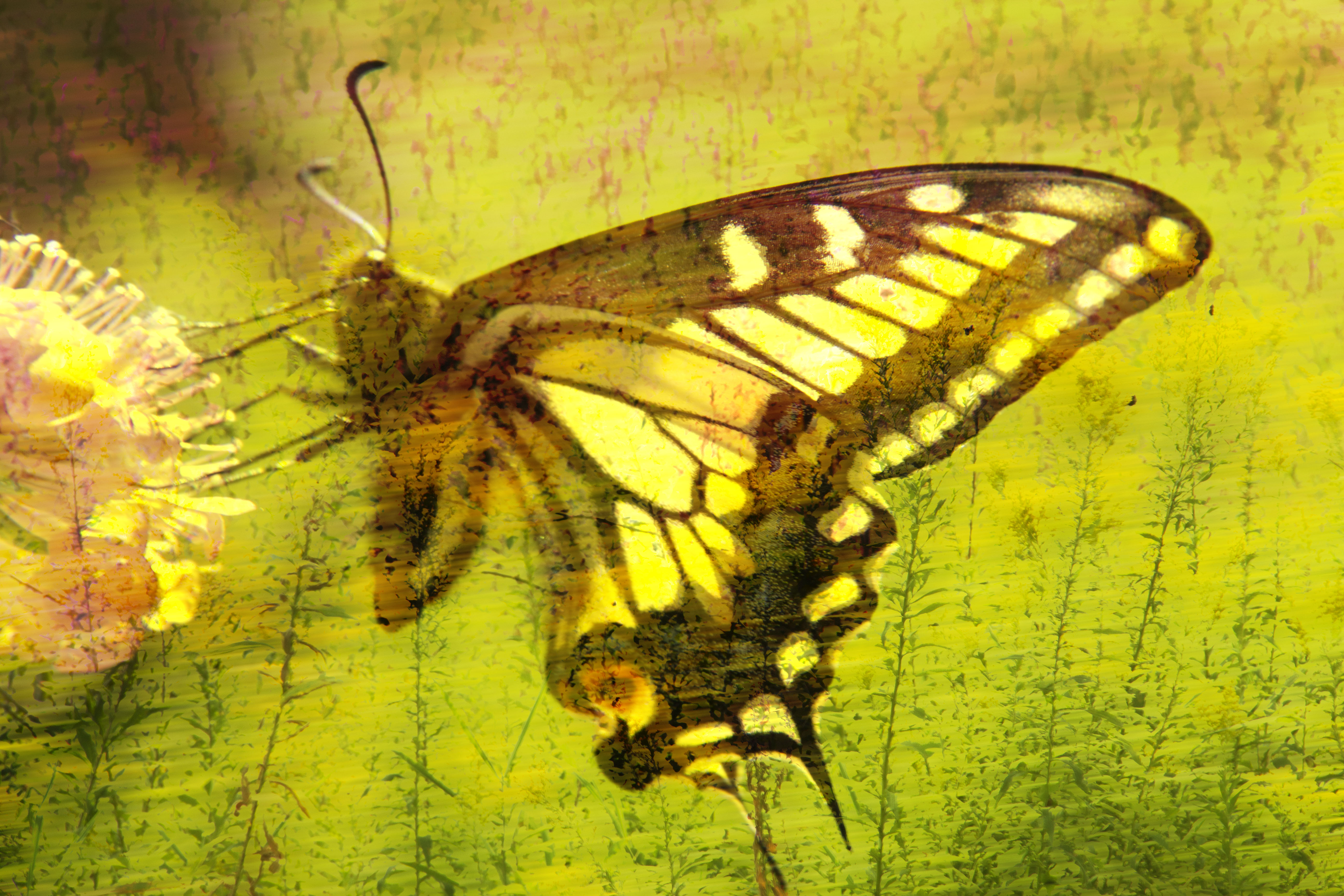 Tiger Butterfly Abstract