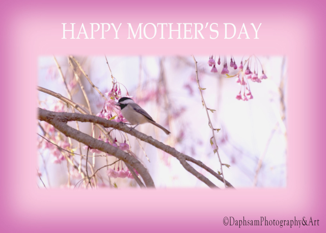 mothersday chickadee copyright